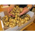 Högsta bud för färskpotatis 1 400 kr/kg