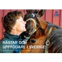 Ny rapport: Hästar och uppfödare i Sverige