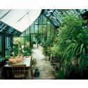 Hartley Botanics växthus överlägsna