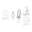 Egtvedpigens kindtand, hendes hovedhår og en tommelfingernegl er anvendt til strontiumisotopanalyse