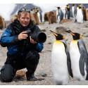 Följ med den kända naturfilmaren Arne Nævra till Svalbard