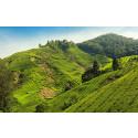 Uutta ensi talvelle! Sri Lankan luontoparatiisi