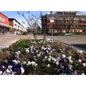 Blommor, bin och barn på Selma Lagerlöfs Torg