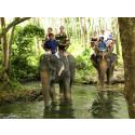 Apollo tar bort plågsamma elefantutflykter från programmet