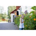 Tusen Trädgårdar 29 juni 2014, kl 10:00-17:00
