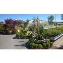 Vackra sommarbilder från vår kund Nilssons Plantskola i Kullavik.