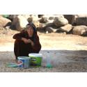 Röda Korset delar ut nöd-kit för kvinnor på flykt i Syrien