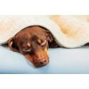 Nya HusdjursPanelen visar: Svenska husdjursägare sjukskriver sig ofta för vård av sjukt husdjur  - 1,75 miljoner hushåll vill få betald ledighet för vård av husdjur