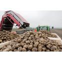 Mindre Potatis i Sverige och Europa