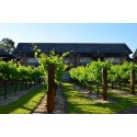 The Vines notches up 25 years in Swan Valley