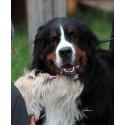 Hunden på Stora Nolia