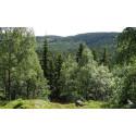 Fyra nya naturreservat i Värmland