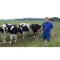 Vestjysk råmælksproducent vinder gastronomisk hæderspris