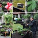 Stockholm stad och Hässelby Blommor i pilotprojekt kring urbana odlingar