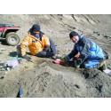 Jourhavande paleontolog i fält