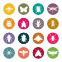Forskningsrådet Formas inbjudan: Insekter - det nya köttet?