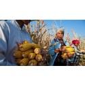 Verdens matvaredag: - Behov for et skifte i verdens matsystem