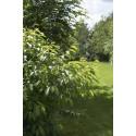 Hva kan jeg gjøre med naboens hekker og trær?