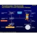 Panobinostat dobler tiden uten sykdomsutvikling for pasienter med myelomatose