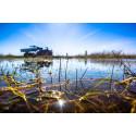 Dammar och stängsel skyddar paddorna på Revingehed