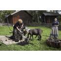 Høsten starter med Sau – Saks  – Ull på Norsk Folkemuseum