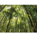 Grön it sparar miljö och pengar
