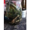 Ormar i formalin, skjutvapen och läkemedel - udda fynd på SÖRAB:s återvinningscentraler