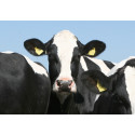 Arla to raise organic premium for farmers