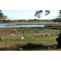 Nya EU-stödet för våtmarker - ett hinder för den biologiska mångfalden