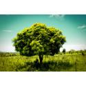 Sju miljoner nya träd i Vi-skogen