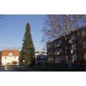 Bostadsrättsförening i Sundsvall skänker enorm julgran