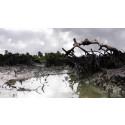 Nigeria: Hundratals oljeutsläpp förpestar Nigerdeltat