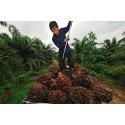 Mondelēz International julkaisee toimintasuunnitelman kestävän kehityksen mukaisen palmuöljyn tuotannosta