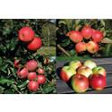 Fyra nya äppelsorter introduceras!