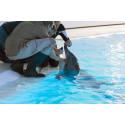 Delfin på Kolmården får sina tänder lagade med laser