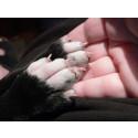 Hundkollen: Problem med kloklippning det finns alternativ.