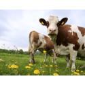 Positiv biogassignal från regeringen
