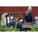 Høstferie er potetferie på Norsk Folkemuseum