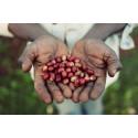 Johan & Nyström besöker Adado & kaffefarmen Mordecofe i Etiopien