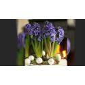 Nu kan du välja klimatcertifierade blommor i advent