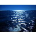 Åtgärdsprogram för havsmiljön får svidande kritik