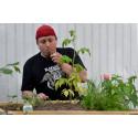 Nu odlar Gavlegårdarnas hyresgäster i pallkrage