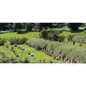 Begravning Skogskyrkogården
