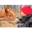 Ny rapport om om avel och hästuppfödning