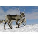 Pressmeddelande från styrkommittén för Interreg IV A Nord Sápmi