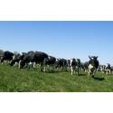 Klar til nye økologer og mere øko-mælk