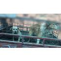 Djurens Rätt startar upprop för en skinnfri handel