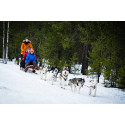 Huskies och hockey lockar britter till Skellefteå