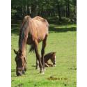 Räddningscenter för hästar i nöd
