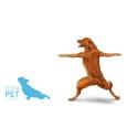 Yoga för ditt husdjur
